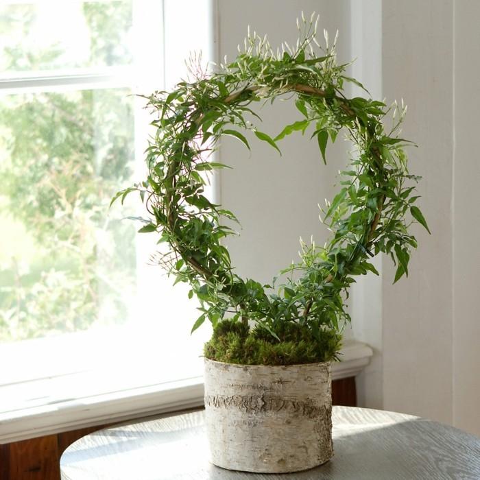 Jasmin Zimmerpflanze  ein grner Hingucker zu Hause