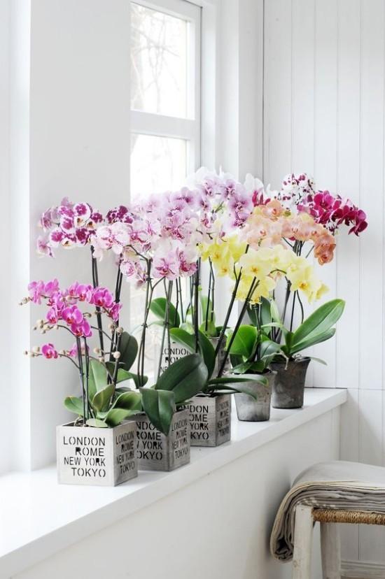 Blumen Bedeutung und Symbolik nach Feng Shui entrtselt  Fresh Ideen fr das Interieur