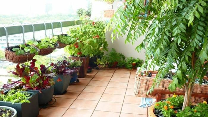 Gemsegarten anlegen und sich ber frohe Ernte auf Balkon