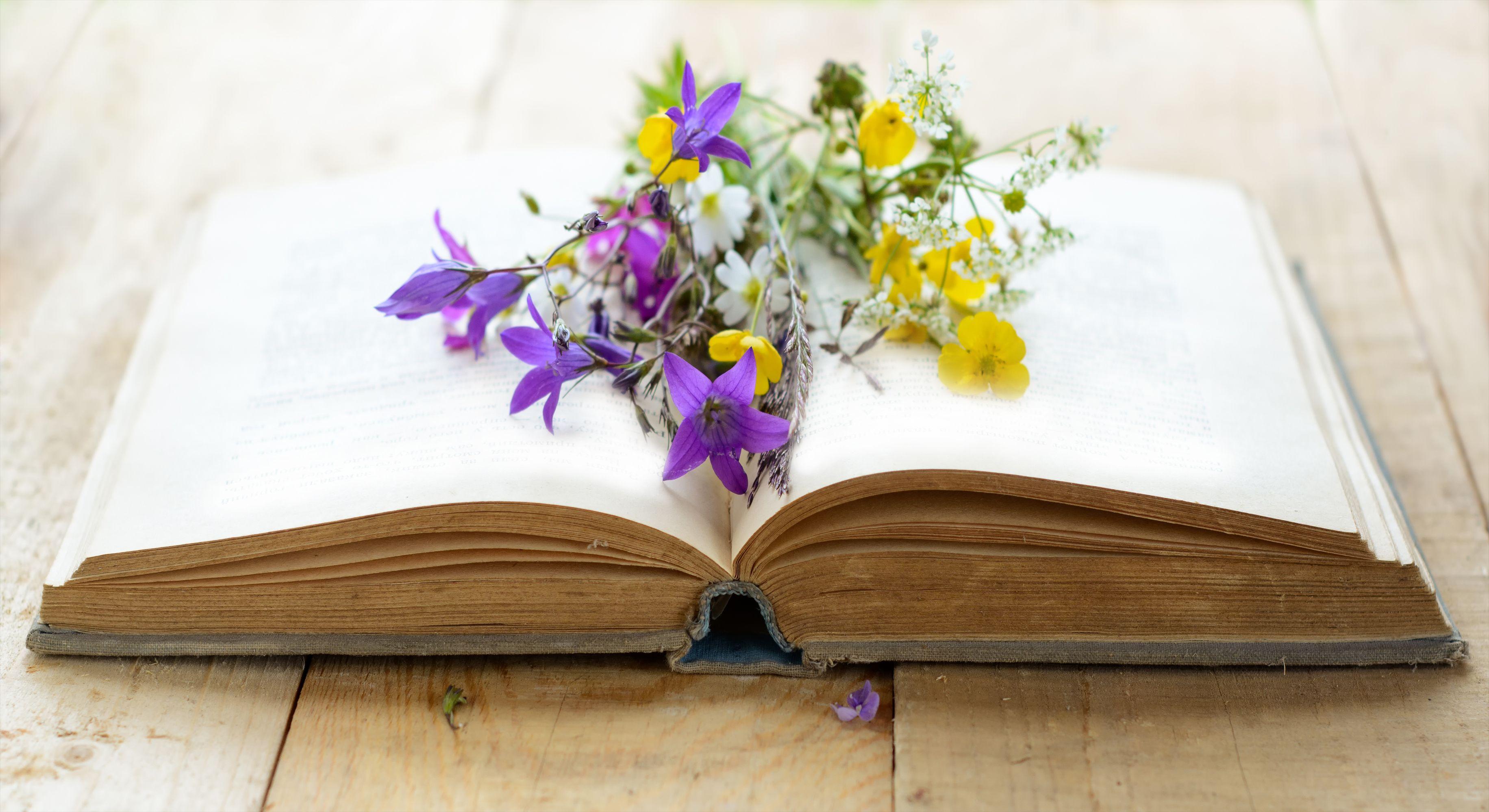 Blumensprache Welche Nachricht senden die Blumen  Fresh