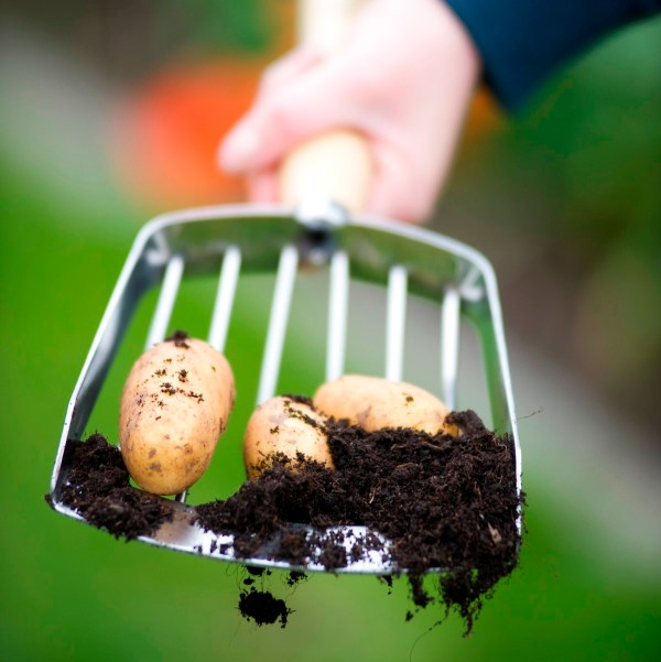 Gardeners Freshly Forked