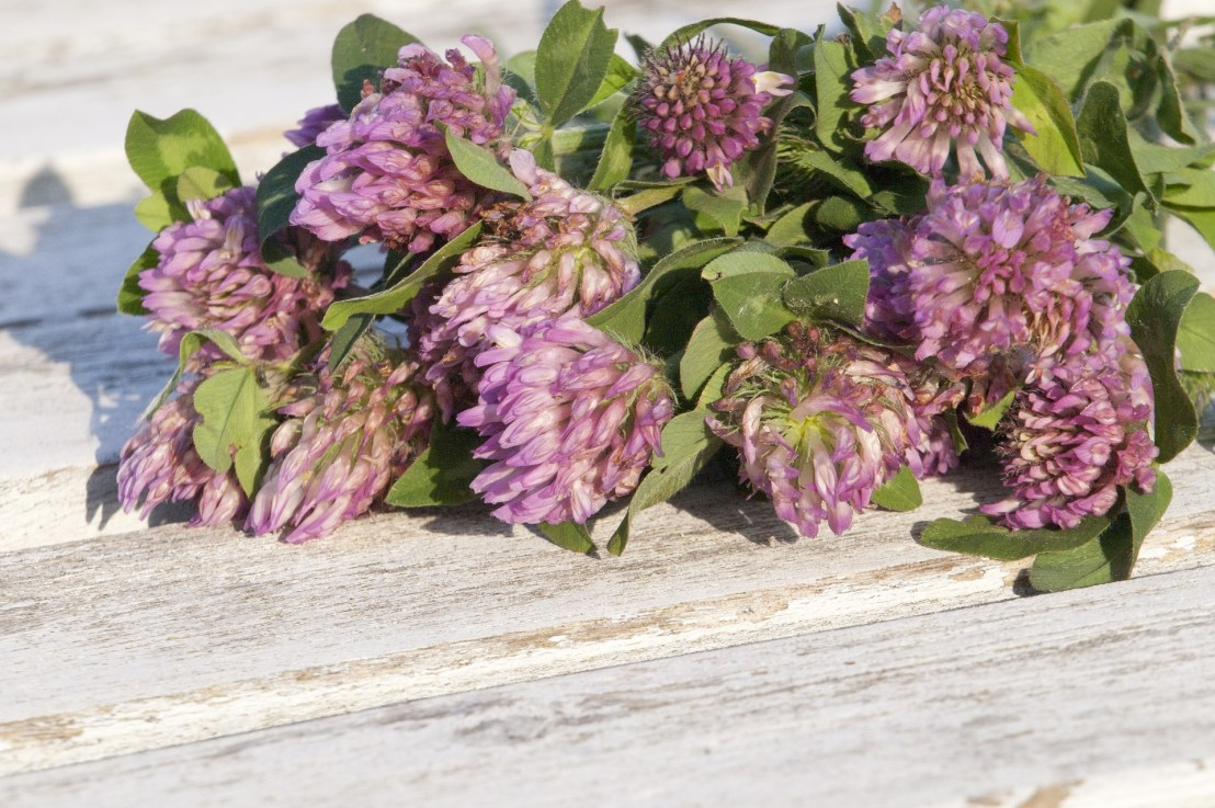 Red Clover Herb