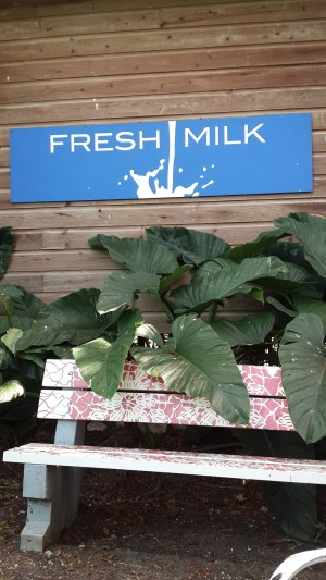 The grounds at Fresh Milk