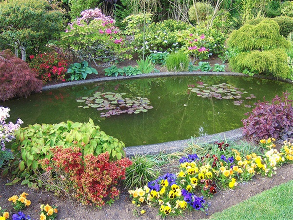 Garden Pond Shapes