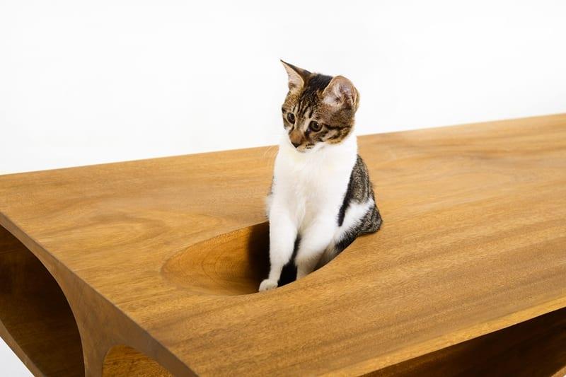 CATable  designer Schreibtisch und Spielflche fr Katzen