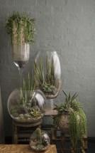 Air Plant Terrariums 05 Great Ideas