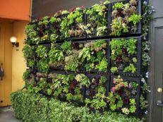 Vertical Wall Vegetable Garden