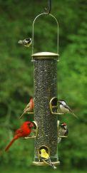 Big Bird Feeders