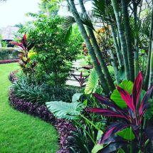 Tropical Garden Design Plants