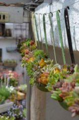 Outdoor Succulent Garden Ideas 11