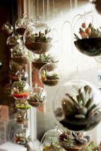 Outdoor Succulent Garden Ideas 5