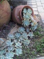 Outdoor Succulent Plant Garden 4