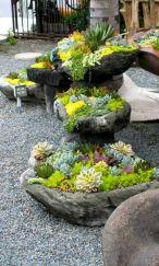 Outdoor Succulent Plant Garden 5