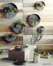 Outdoor Succulent Plant Garden 7