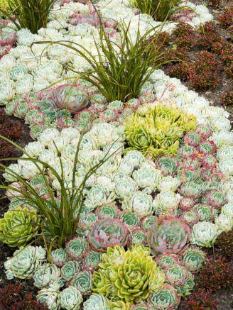 Small Succulent Container Garden Ideas 14