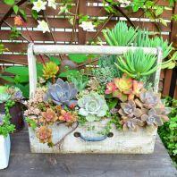 Small Succulent Container Garden Ideas 15