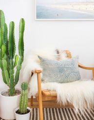 Cactus Home Decor Ideas 14
