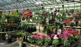 Indoor Greenhouse Plants
