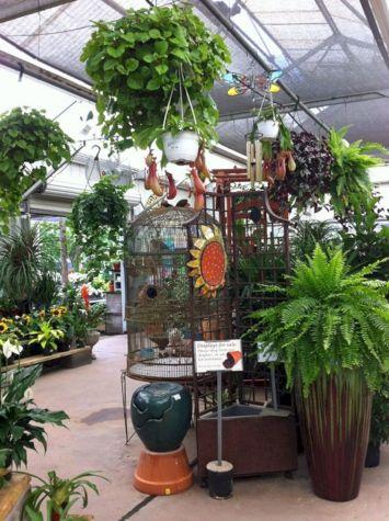 Indoor Tropical Plants Ideas