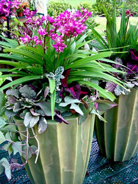 Pink Container Garden Plants