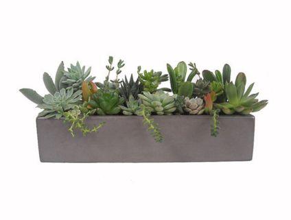 Modern Succulent Arrangements Rectangular Planter