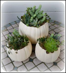 Pumpkin Succulent Planter DIY