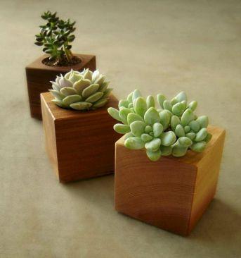 Succulent Wood Planters Modern