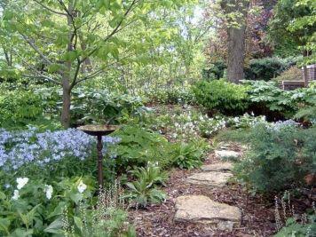 Woodland Garden Landscaping Design