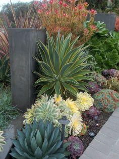 Garden Succulent Ideas 26