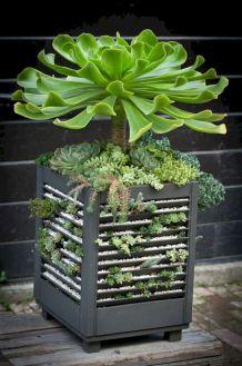 Garden Succulent Ideas 4