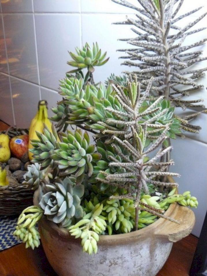 Garden Succulent Ideas 5