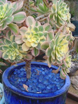 Garden Succulent Ideas 8