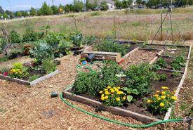 Community Garden Ideas For Inspiration 1