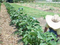 Community Garden Ideas For Inspiration 14