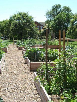Community Garden Ideas For Inspiration 17