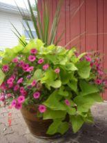 Container Gardening Ideas 11