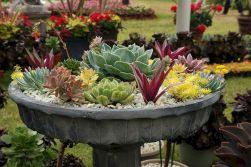 Container Gardening Ideas 18