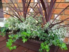 Container Gardening Ideas 20