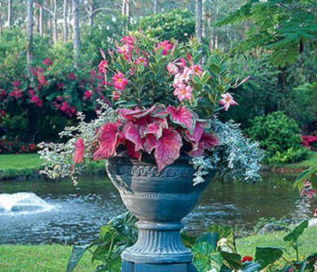 Container Gardening Ideas 28