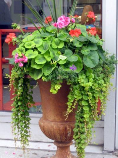 Container Gardening Ideas 3