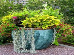 Container Gardening Ideas 7