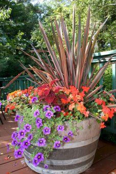 Container Gardening Ideas 9