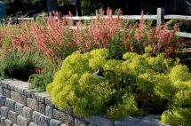 Orange Garden Color Inspiration 13