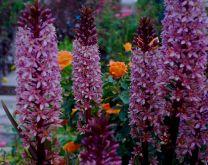 Orange Garden Color Inspiration 16