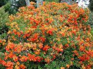 Orange Garden Color Inspiration 18