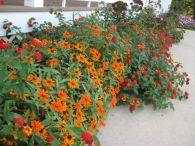 Orange Garden Color Inspiration 8