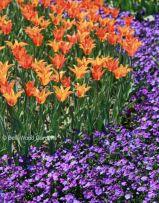 Orange Garden Color Inspiration 9