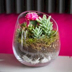 DIY Succulent Terrarium Ideas 4
