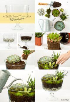 DIY Succulent Terrarium Ideas 5