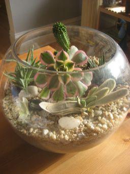 DIY Succulent Terrarium Ideas 8